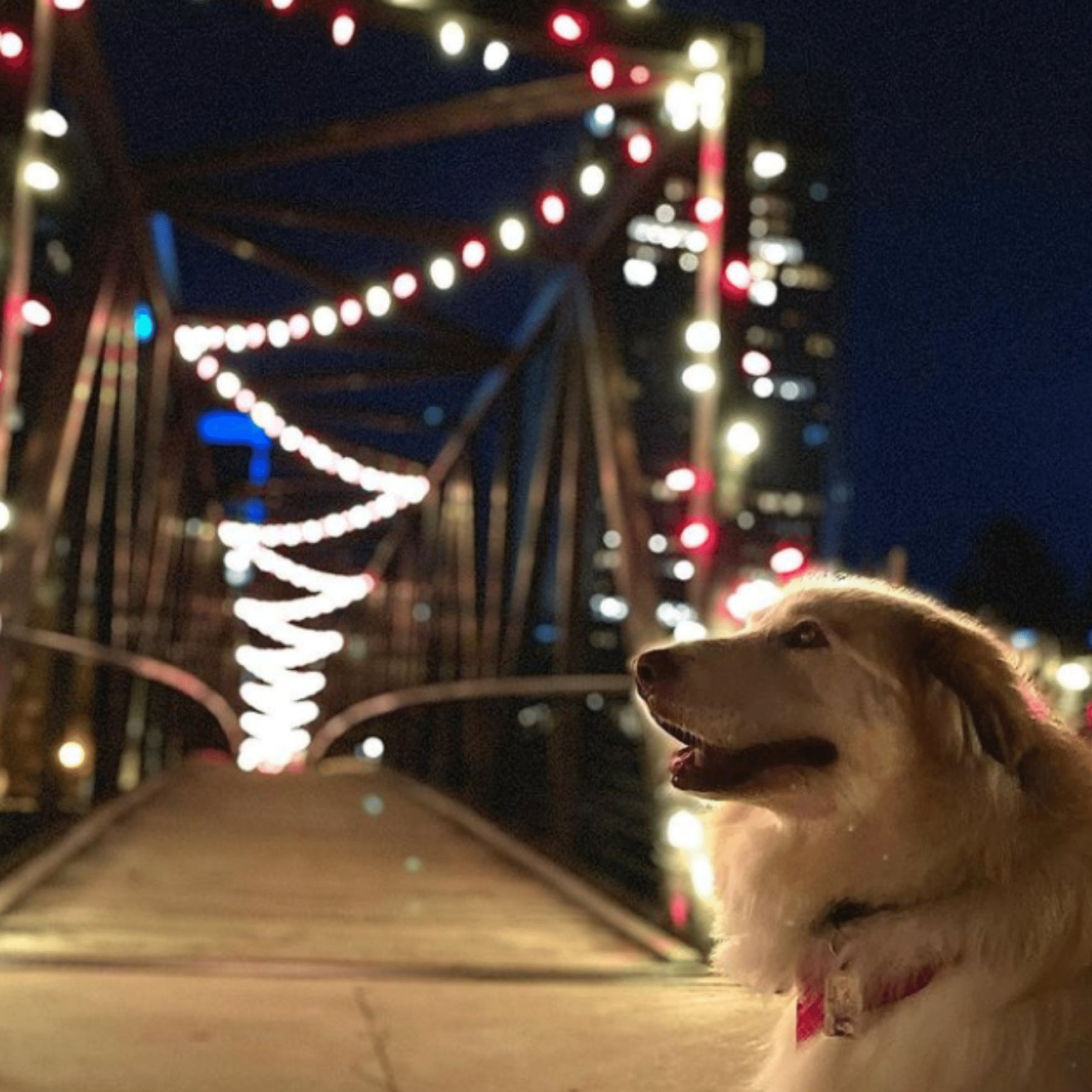 9 Holiday Instagram Spots to Visit in Downtown Richmond