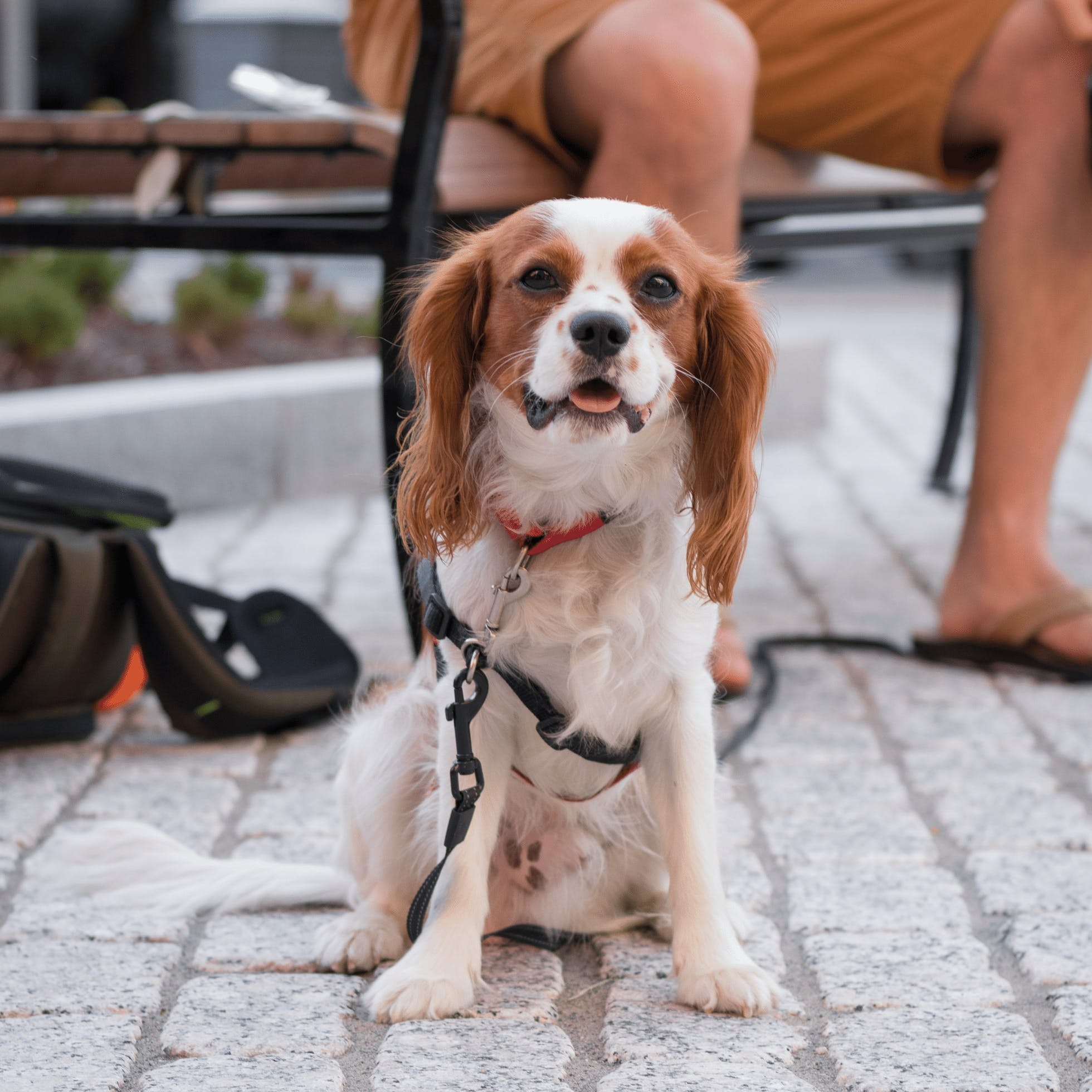 Your Guide to Dog-Friendly Spots in Downtown Richmond